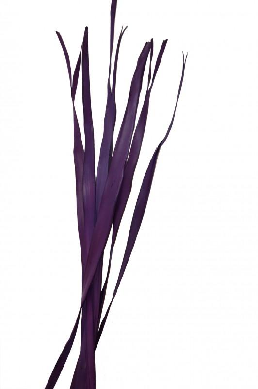 Sun Palmen Blätter aubergine ca. 100cm Bund mit 250g