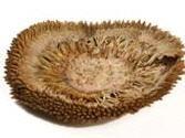 Jackfruit Scheibe Ø5-7cm