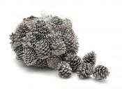 Schwarzkiefer Zapfen weiß 5-6cm 1kg