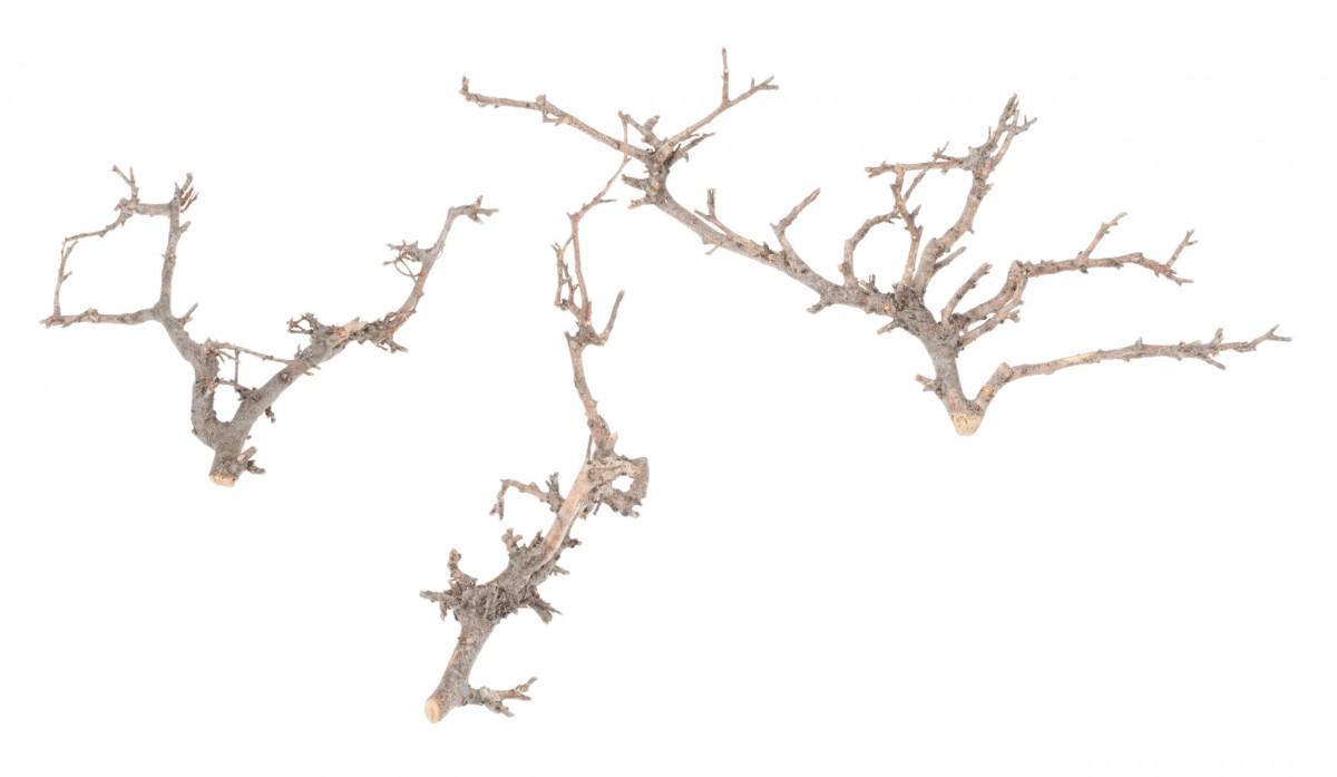 bonsai ste natur mit holzkiste. Black Bedroom Furniture Sets. Home Design Ideas