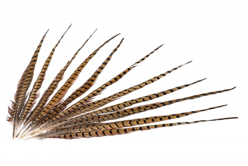 Fasanenfeder natur 10 Stk. 45-50cm