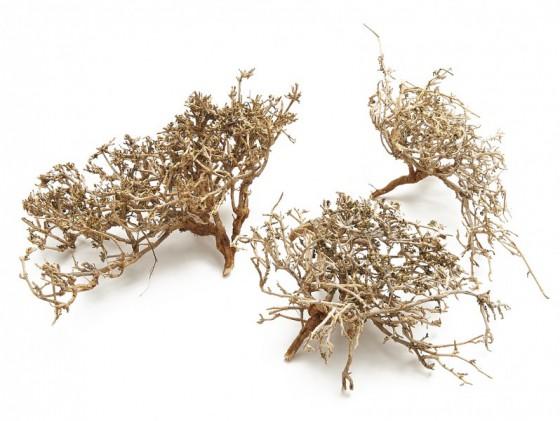 nadeco dry bush natur 0 5kg deko zweig korallenholz korallenzweige deko ebay. Black Bedroom Furniture Sets. Home Design Ideas